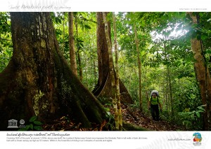 Lowland Dipterocarp Raiforest, Mt. Tambayukon