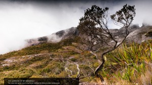 The Gardens of Mt. Kinabalu