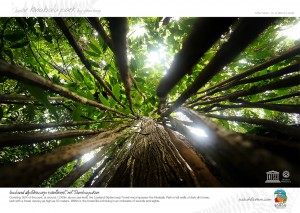 Lowland Dipterocarp Raiforest, Kinabalu Park